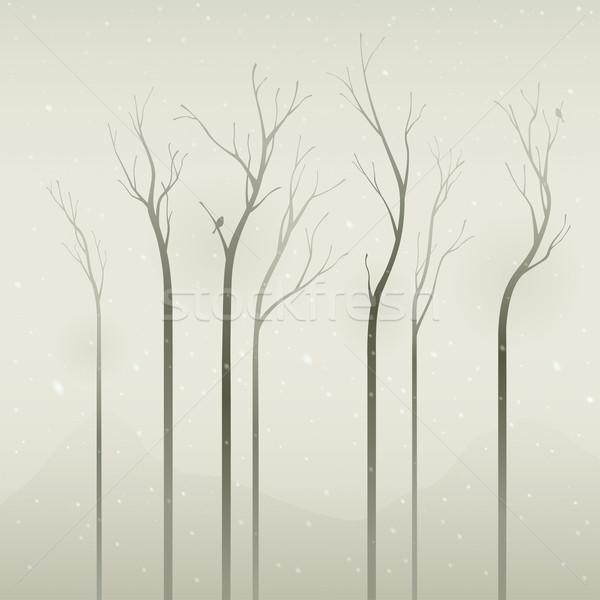 Csendes tél aszalt fák puha szín Stock fotó © ori-artiste