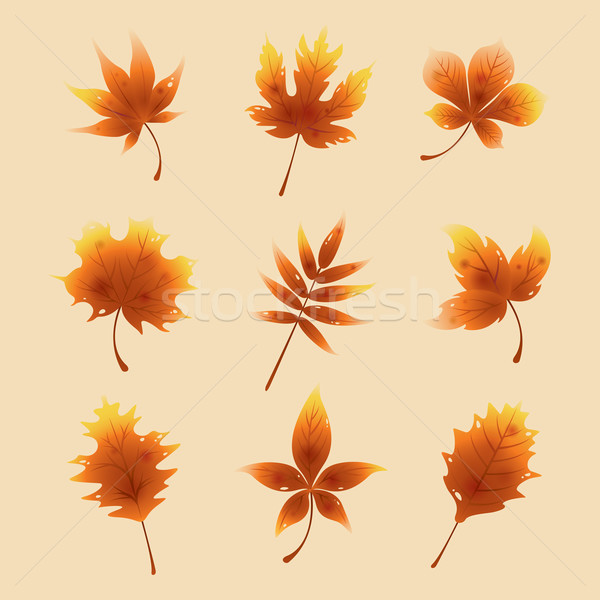 ősz piros juhar levelek izolált gyűjtemény Stock fotó © ori-artiste