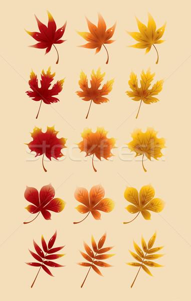 ősz piros juhar levelek őszi levelek átalakulás Stock fotó © ori-artiste