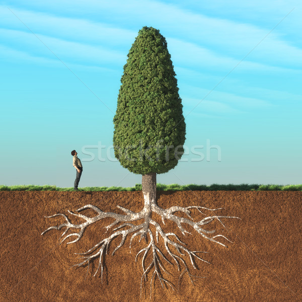 Adam aramak büyük ağaç iki Stok fotoğraf © orla