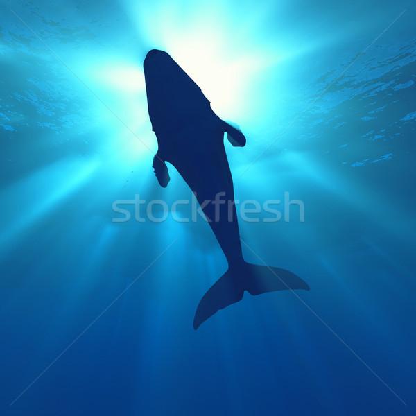 Bálna vízalatti jelenet mély óceán 3d render Stock fotó © orla