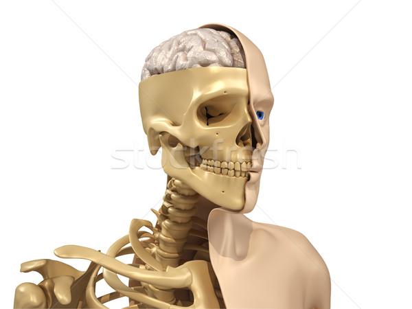 人間 ボディ スケルトン 脳 3dのレンダリング 顔 ストックフォト © orla