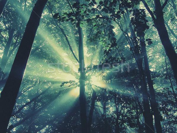 Сток-фото: лес · свет · лист · Восход · осень