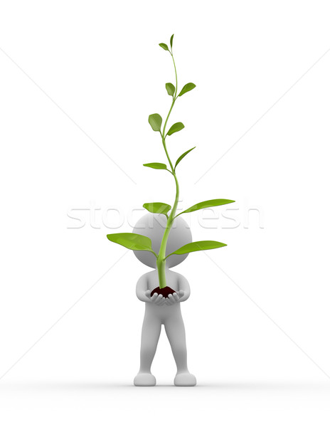Big plant Stock photo © orla
