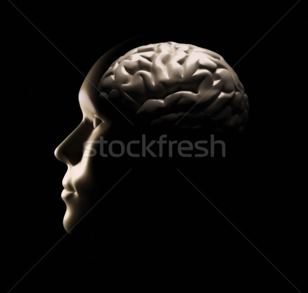 Human brain  Stock photo © orla