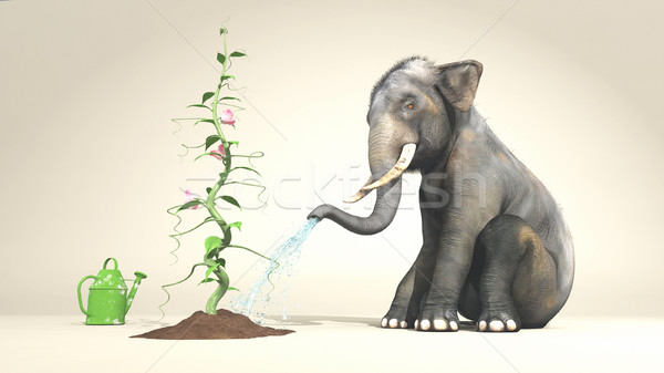 Stock photo: Elephant watering a plant
