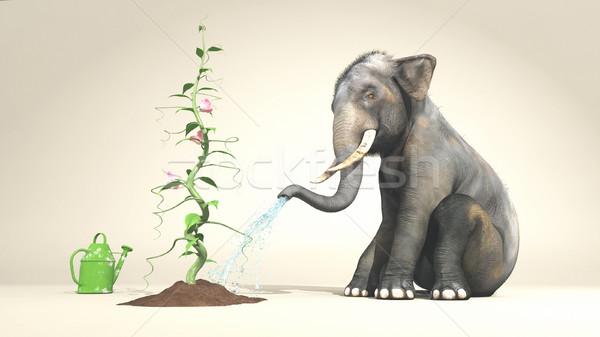 Elephant watering a plant  Stock photo © orla
