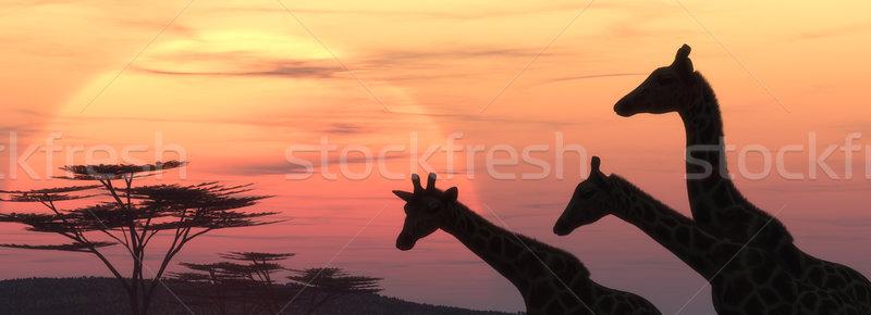 The giraffe silhouette  Stock photo © orla