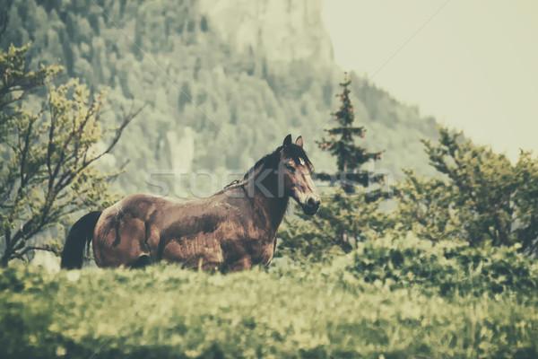 Ló erdő tájkép fák hegy zöld Stock fotó © orla