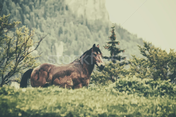 Horse Stock photo © orla