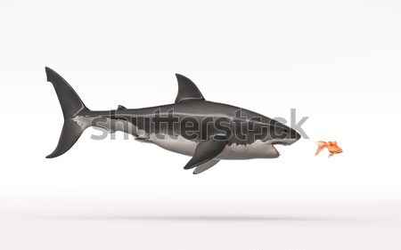 The white shark Stock photo © orla