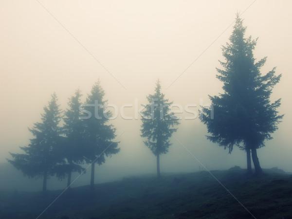 тумана лес дерево пейзаж свет цвета Сток-фото © orla