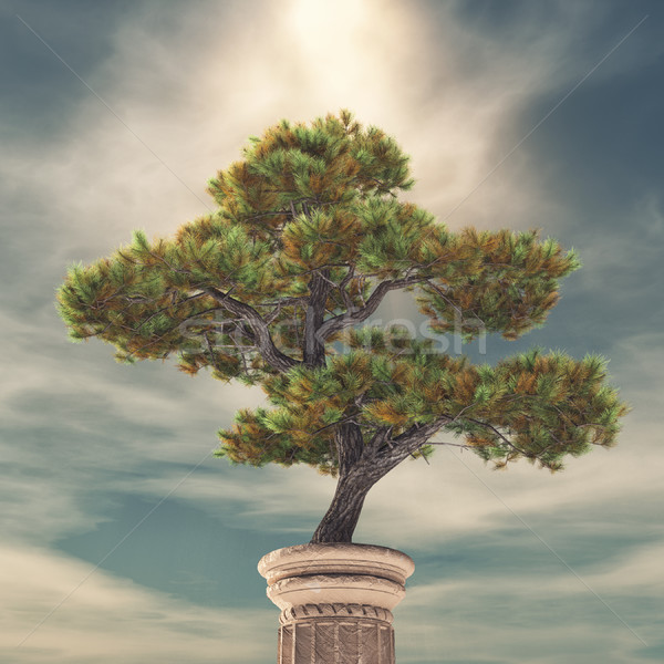 Column and a pine tree Stock photo © orla