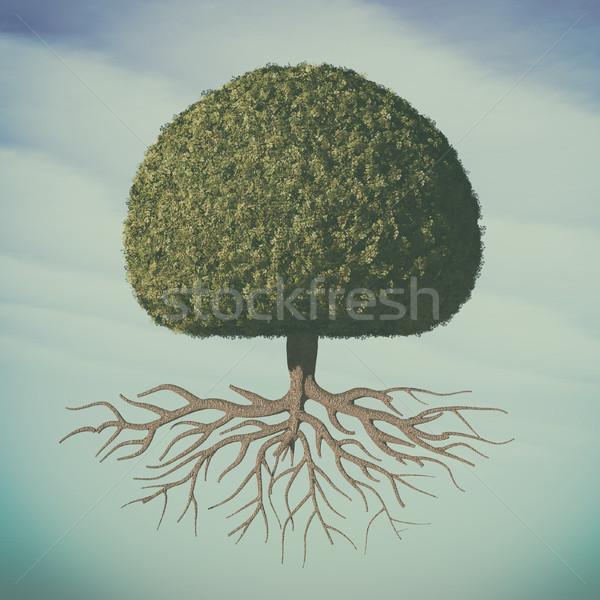 Perfetto albero foglie verdi sfera radici Foto d'archivio © orla