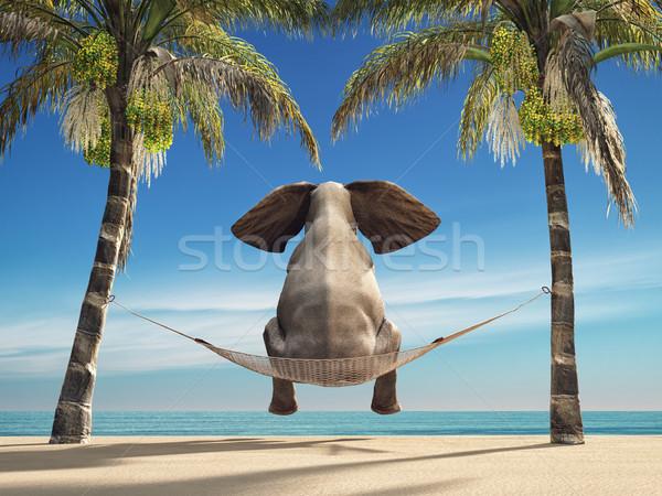 Elefanten Sitzung Hängematte Strand aussehen Meer Stock foto © orla