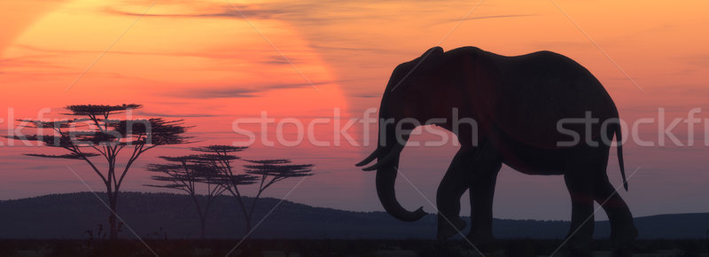 African elephant silhouette  Stock photo © orla
