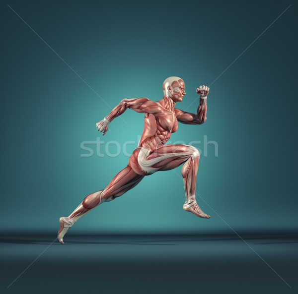 Male muscular system running Stock photo © orla