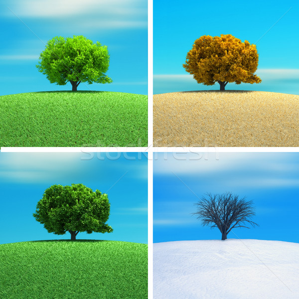 Tree Stock photo © orla