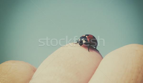 Coccinella mano natura estate rosso pelle Foto d'archivio © orla