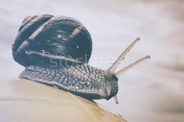 Snail on hand  Stock photo © orla