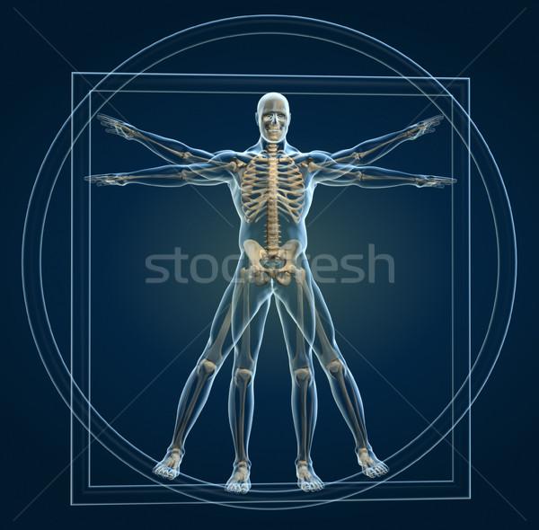 Body and skeleton in vitruvian man  Stock photo © orla