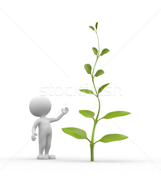 Planta 3d pessoas homem pessoa árvore primavera Foto stock © orla