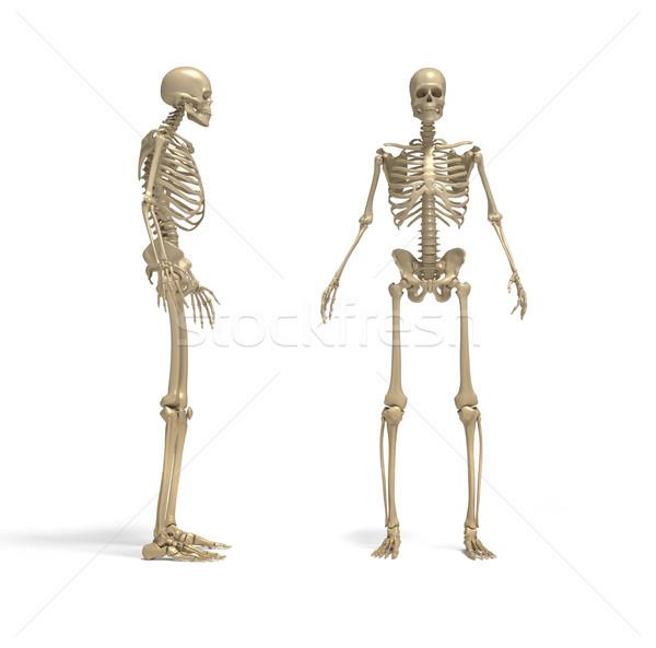 Csontváz 3d render illusztráció férfi absztrakt csontok Stock fotó © orla