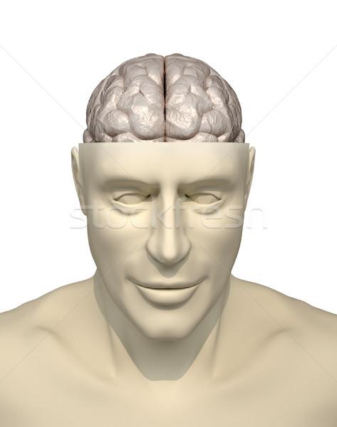 Intelligencia 3d render illusztráció üzlet egészség fej Stock fotó © orla