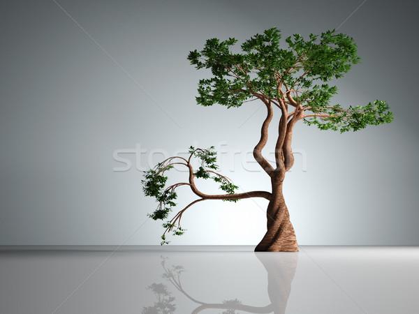 Bonsai 3d render ilustração planta japonês Foto stock © orla