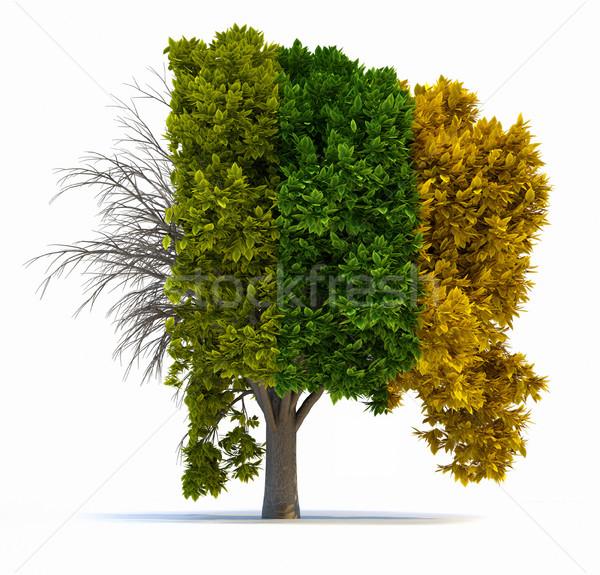 Négy évszak fa 3d render illusztráció levelek élet Stock fotó © orla