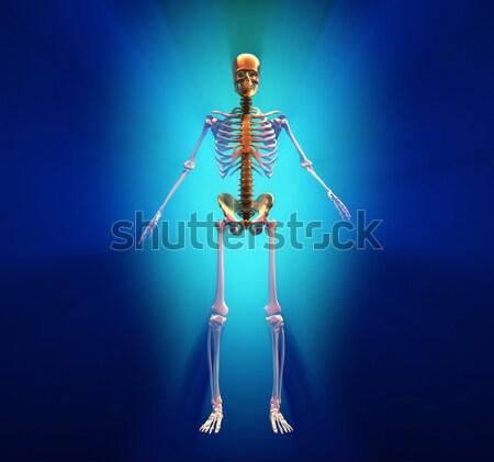 Human skeleton Stock photo © orla
