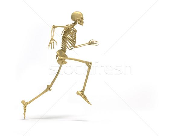 Csontváz fut emberi 3d render illusztráció férfi Stock fotó © orla