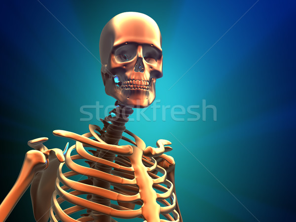 Human skeleton  Stock photo © orla