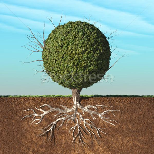 árbol hojas verdes forma esfera raíces subterráneo Foto stock © orla