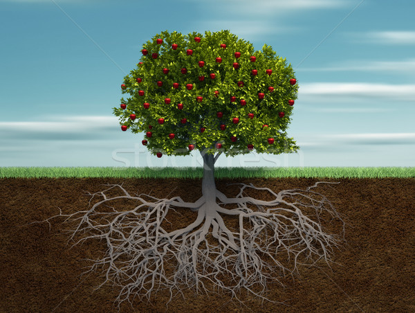 Conceptual tree with apple and root Stock photo © orla