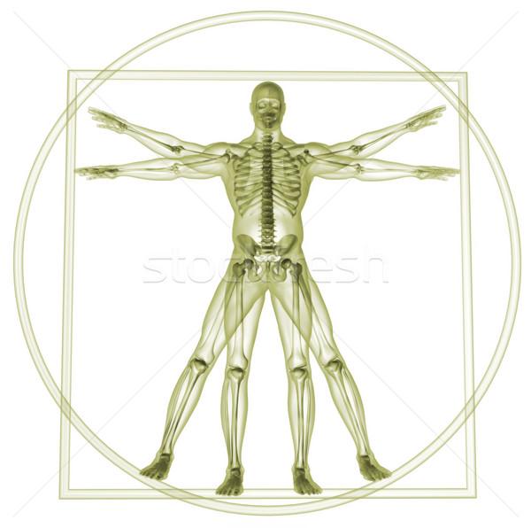 Vitruvian man Stock photo © orla
