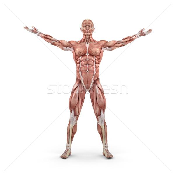 Ver muscular 3d render ilustração esportes Foto stock © orla