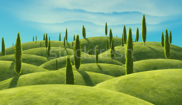 Green cypress trees  Stock photo © orla