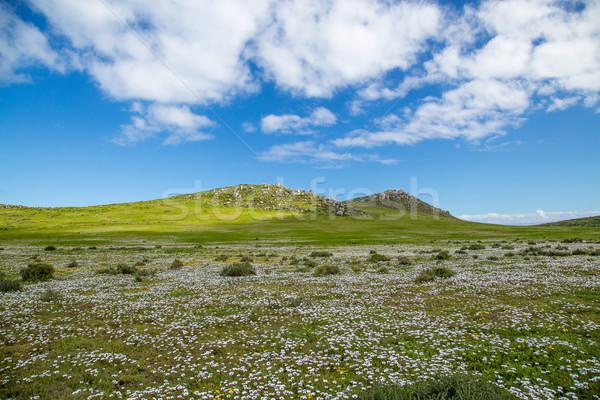 Tepeler yeşil renkli çiçekler iki mavi Stok fotoğraf © ottoduplessis