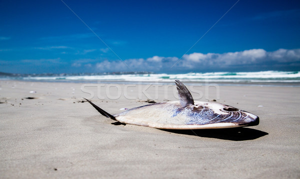 Stranded Mola Mola Sunfish Stock photo © ottoduplessis