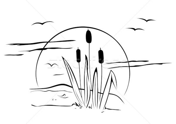 Cattails on illustration Stock photo © oxygen64