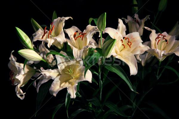 Boeket lelie bloem zwarte Stockfoto © pab_map