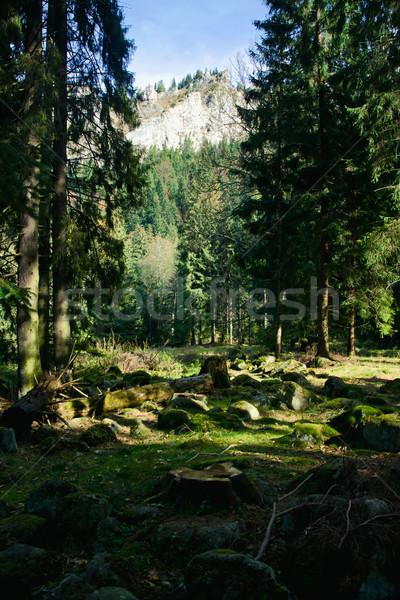 Groene landschap bomen bergen zonnige bos Stockfoto © pab_map