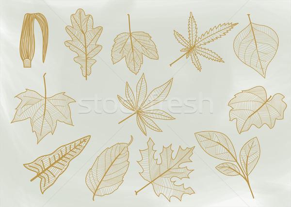 Line leaves. Stock photo © padrinan