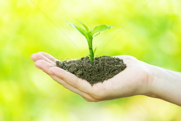 plant in hand  Stock photo © Pakhnyushchyy