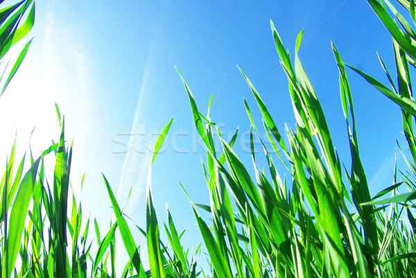 green lawn  Stock photo © Pakhnyushchyy