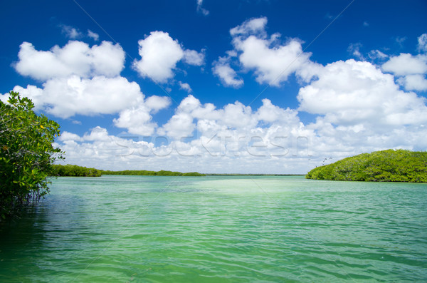 mangrove trees in sea Stock photo © Pakhnyushchyy