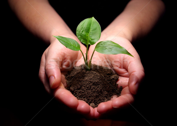 plant is in hands Stock photo © Pakhnyushchyy