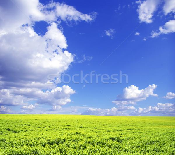 çayır alan mavi gökyüzü bahar çim doğa Stok fotoğraf © Pakhnyushchyy
