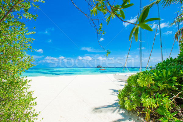 Praia tropical poucos palmeiras azul praia água Foto stock © Pakhnyushchyy